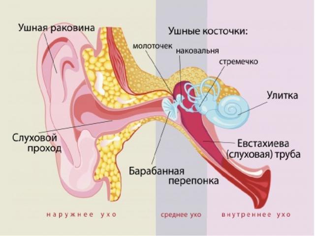 Втянутая барабанная перепонка - причины и лечение уха