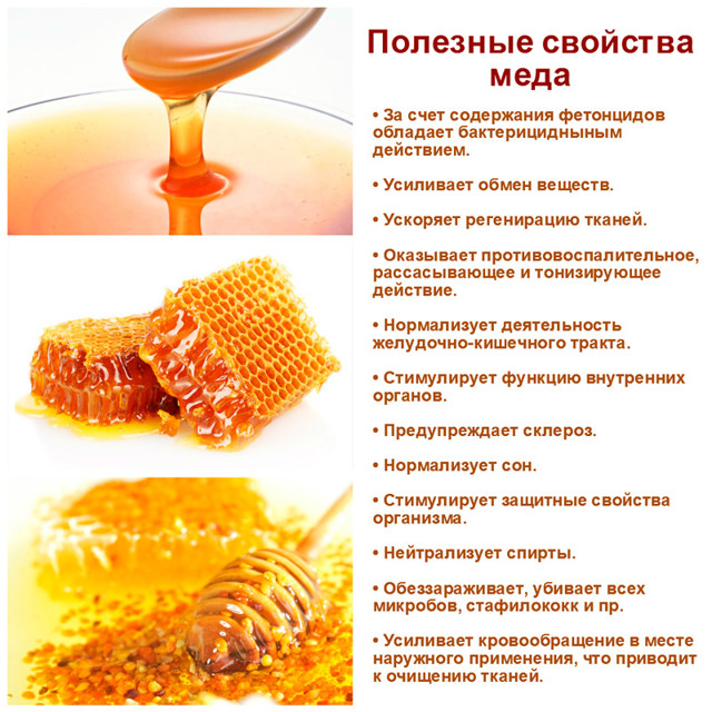 Барсучий жир от кашля – помогает ли он и как его приготовить с медом