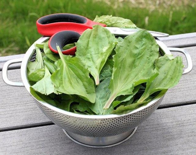 Травы от кашля – какие помогают и как их пить для лечения