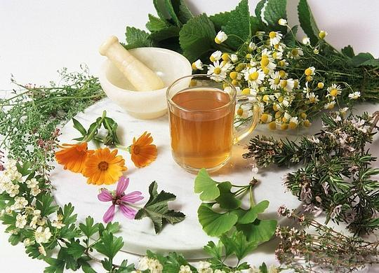 Гомеопатия при гайморите у взрослых - препараты и средства для лечения