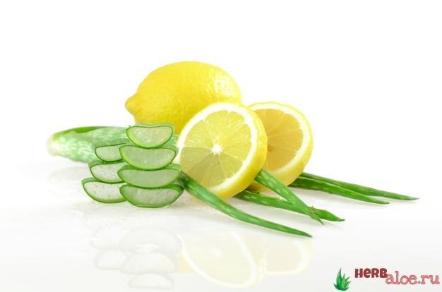 Алоэ от кашля для детей и взрослых – рецепты сока