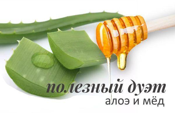 Алоэ и мед от кашля – как приготовить и рецепт для детей