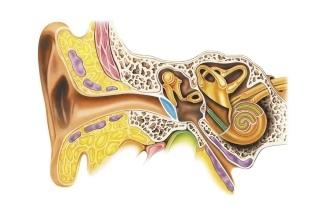Тугоухость 4 степени – лечение нейросенсорного заболевания