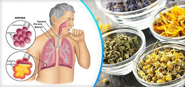 Чай от кашля – травяной отхаркивающий для детей и взрослых