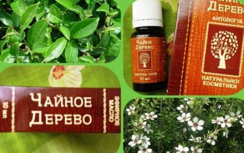 Масло при ангине – облепиховое и пихтовое, эфирное и чайного дерева