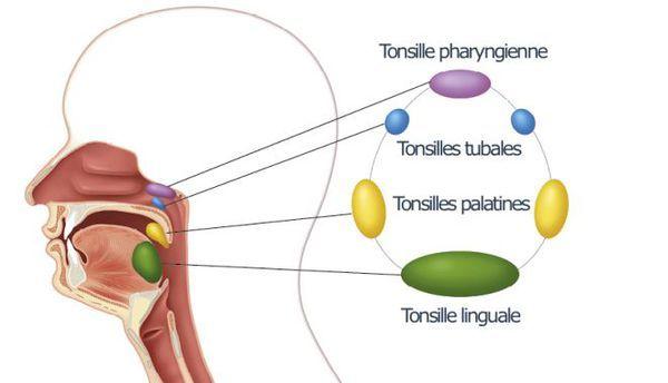 Методы и особенности лечения ангины