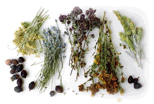 Растительные сиропы от кашля на травах