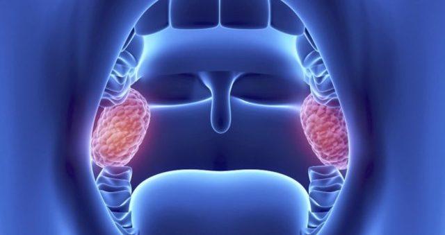 Что такое гланды и миндалины в горле – для чего нужны и где находятся во рту
