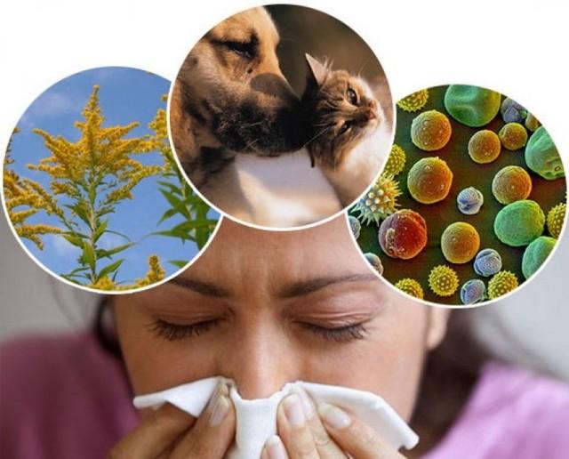Аллергический синусит – симптомы и лечение у взрослых и детей