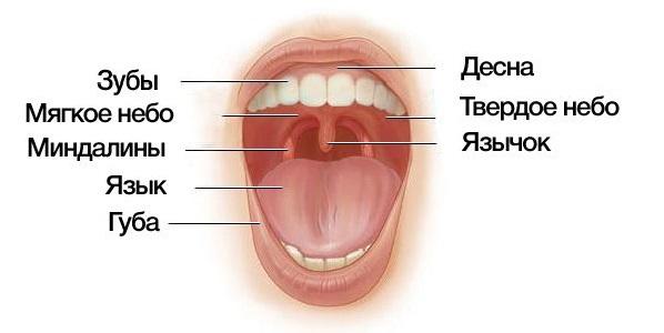 Папилломатоз гортани рецидивирующий – папилломы в горле и на миндалине