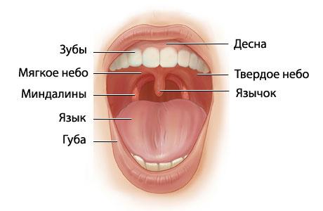 Белый налет при ангине  на языке - как убрать и чем снять
