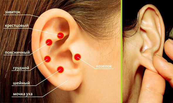 Массаж ушей и ушных раковин – его польза, как и когда делать детям и взрослым