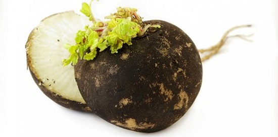 Черная редька от гайморита - как его лечить этим растением
