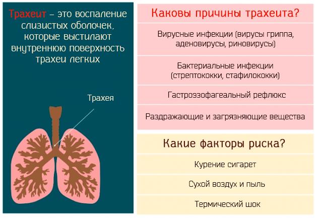 Хронический трахеит – симптомы и лечение взрослых