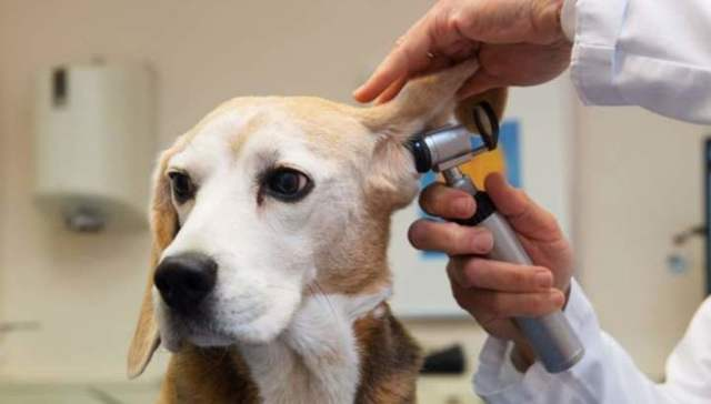 Запах из ушей у человека – причины и лечение