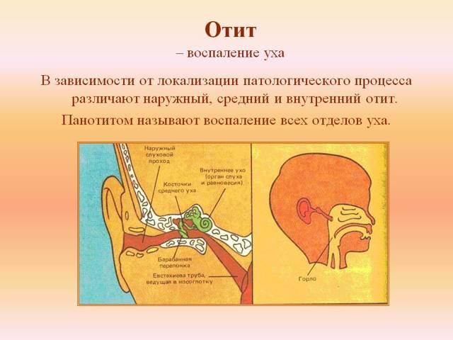 Средства для лечения уха: виды и способы их применения