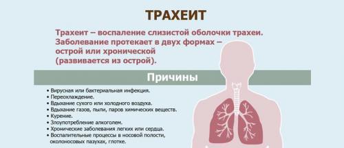 Что такое кашель в горле – причины и сколько длиться