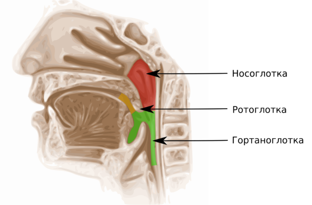 Отчего болит горло — причины и опасности