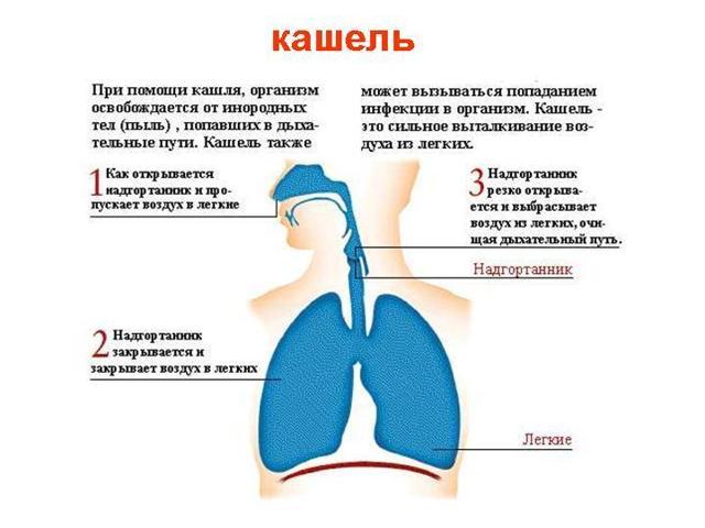 Как и чем лечить лающий кашель у ребенка