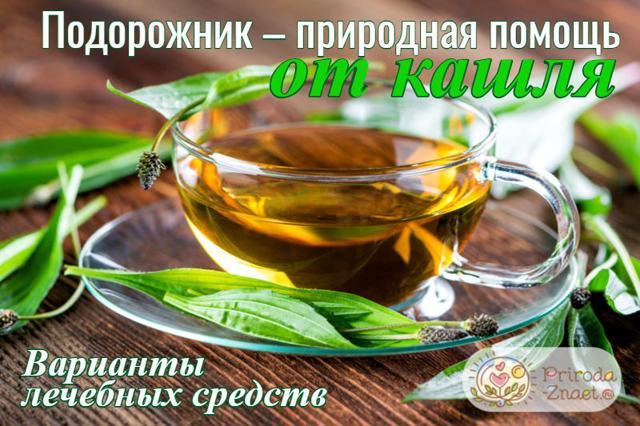 Подорожник от кашля – рецепт сока и отвара